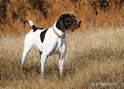 """German Shorthair Pointer"" by Robert W. Hickman"