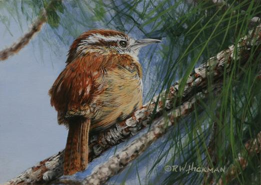 """Carolina Wren in Pine"" by Robert W. Hickman"